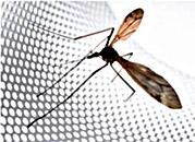 Москитные сетки от назойливых насекомых